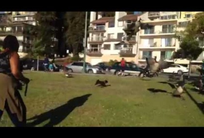 Dog Chases Geese At Lake Merritt Oakland
