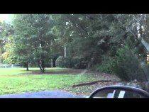 The Deer In Our Yard In Georgia – Video